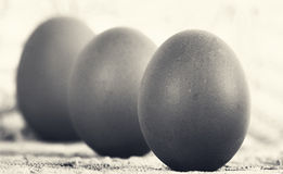 Free Eggs Stock Images - 56008324