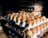 Eggs. And eggbox Stock Images