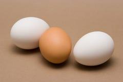 Eggs. Three Eggs Royalty Free Stock Photo