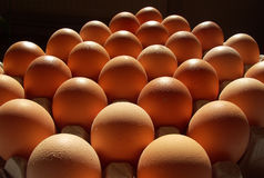 Free EGGS Royalty Free Stock Photography - 6230307