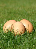 Eggs. New Laid Eggs royalty free stock photos