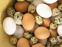Eggs. Mix royalty free stock photos