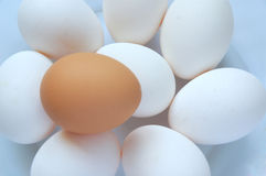 Eggs. A lot of white and brown eggs Stock Photography