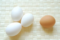 Eggs. A lot of white and brown eggs Stock Images