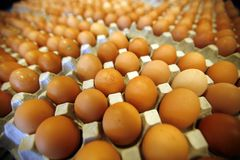 Eggs. At a wholesale market royalty free stock photo