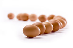 Eggs. In a row on white background Royalty Free Stock Images