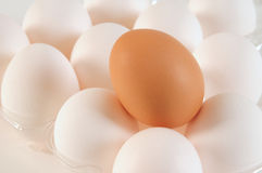 Eggs. Abstract. Royalty Free Stock Photos