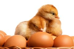 Eggs And Chicken Stock Image