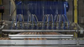 Eggs automated sorting in factory. Transportation and industrial plant selection for egg stock footage