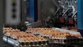 Eggs automated sorting in factory. Transportation and industrial plant selection for egg stock video