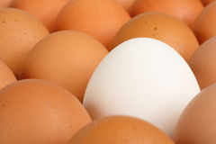Eggs background Royalty Free Stock Photos