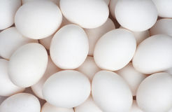 Eggs backgroung Royalty Free Stock Image