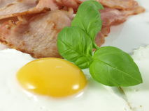 Eggs and bacon with basil. Egg, bacon and basil on isolated background royalty free stock photography