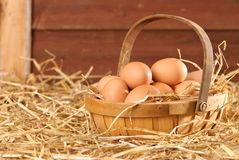 Eggs In The Barn. Free range freshly laid eggs in a straw barn setting Royalty Free Stock Photo