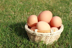 Eggs in a basket. Easter eggs in a wicker-work basket lying on the green grass Stock Photography