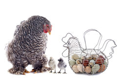 Eggs basket, chicken and chick Stock Photos