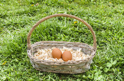 Eggs in basket Royalty Free Stock Image