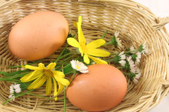 Eggs in a basket Royalty Free Stock Photo