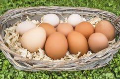 Eggs in basket. Fresh chicken eggs in basket Royalty Free Stock Photos