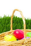 Eggs in the basket and grass Royalty Free Stock Image