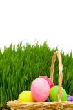Eggs in the basket and grass isolated Stock Photos