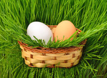 Eggs in the basket on the green grass Stock Photos