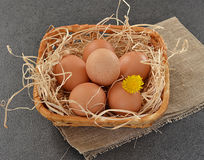 Eggs in a basket on grey background. With a yellow flower royalty free stock photo