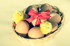 Eggs in basket with ribbon and chicken Royalty Free Stock Images