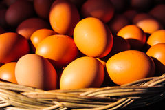 Eggs in the basket with sunlight effect Stock Photos