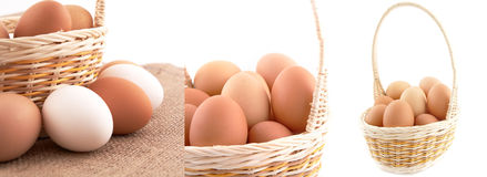 Eggs in basket on white background Stock Images