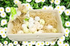 Brown eggs in a basket Stock Photography