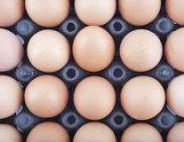 Eggs Stock Photography