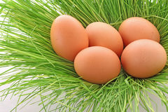 Eggs of a bird Stock Images