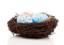 Eggs in birds nest. On white background stock photography