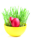 Eggs in a bowl of green grass. Royalty Free Stock Image