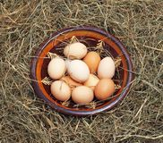Eggs in a bowl on the hay. Brown eggs in a bowl on the hay Stock Image