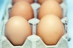 Eggs at the box royalty free stock photo