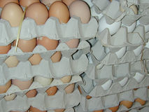Eggs in box Stock Photography