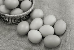Eggs of brown color in cardboard cells Stock Photos