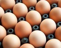 Eggs in cardboard Stock Image