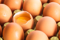 Eggs in cardboard Royalty Free Stock Image