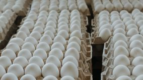 Eggs in a cardboard box from chicken farm stock video