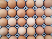 Eggs in a cardboard Royalty Free Stock Images