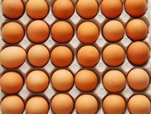 Eggs in cardboard container. An eggs in cardboard container Stock Photos