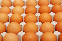 Eggs in cardboard container. An eggs in cardboard container Royalty Free Stock Image