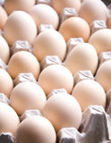 Eggs in cardboard container Stock Photos
