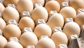 Eggs in cardboard container Royalty Free Stock Images