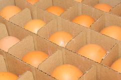 Eggs in cardboard container Royalty Free Stock Photos