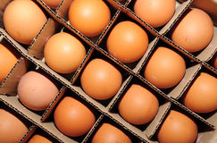 Eggs in cardboard container Stock Image