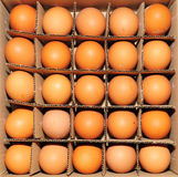 Eggs in a cardboard container Stock Photos